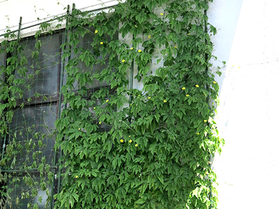Green Curtain Project